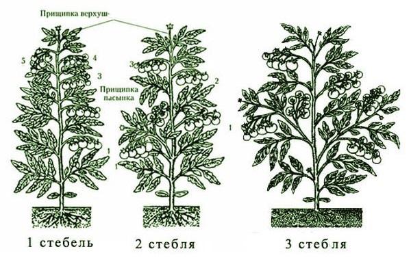 Схемы формирования кустов томатов в один, два или три стебля