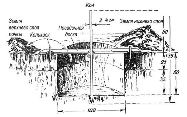 Схема обустройства посадочной ямы для однолетнего саженца груши