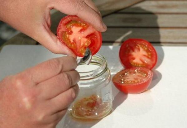 Сбор семян помидоры в стеклянную банку своими руками
