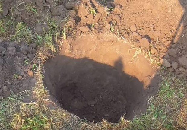 Посадочная яма глубиной около одного метра для груши