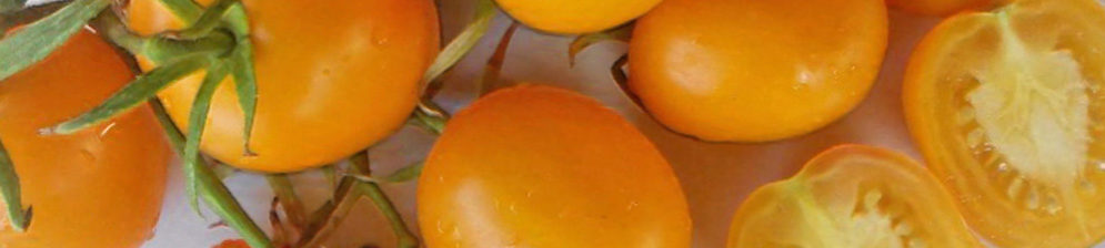 Бурелый не спелый помидор зеленоватый