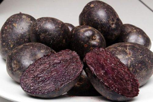 Разрез картофеля сорта Черный принц с мякотью темно-фиолетового цвета
