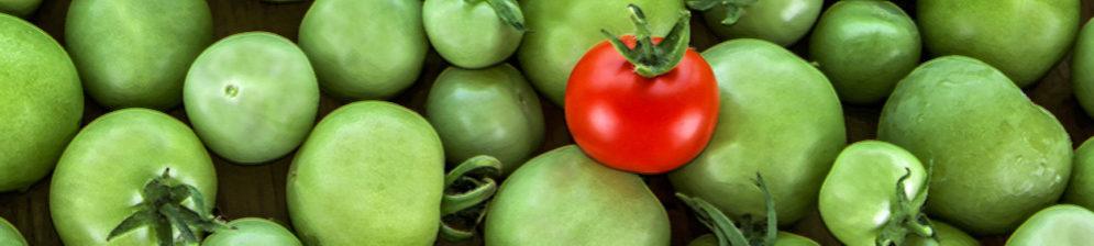 Специально положенный красный помидор к зелёным для дозревания