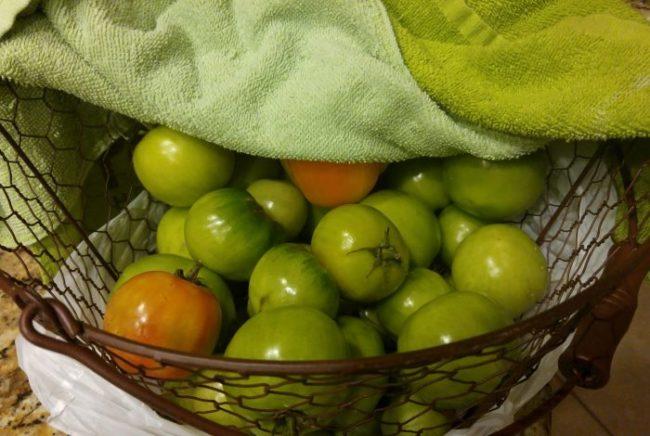 Зеленые помидоры под полотенцем в решетчатой корзинке