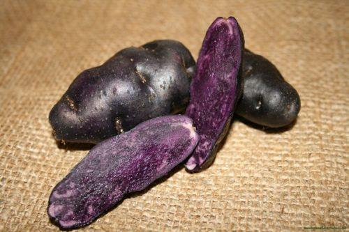 Корнеплоды вытянутой формы черного сорта картофеля Фиолетовый Перуанский
