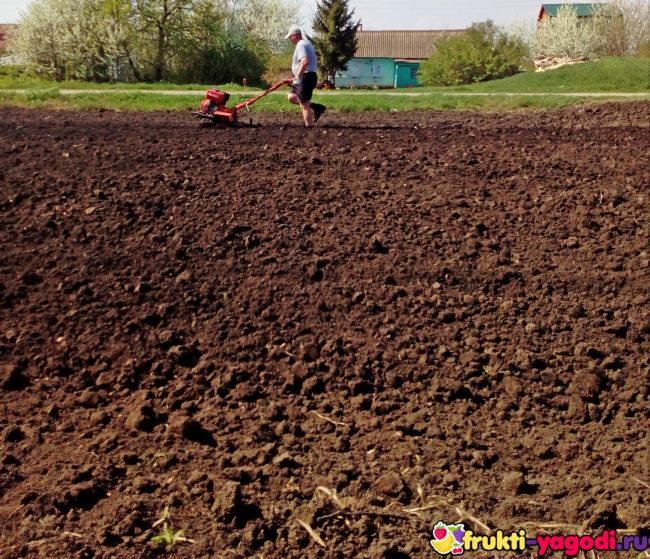 Вскопка огорода при помощи мотоблока