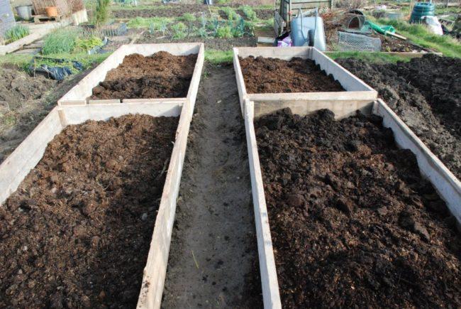 Подготовка высоких грядок из досок для высадки помидоров