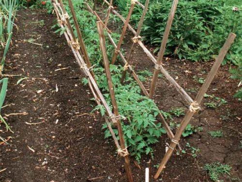 Опора для высокорослых томатов из деревянных реек