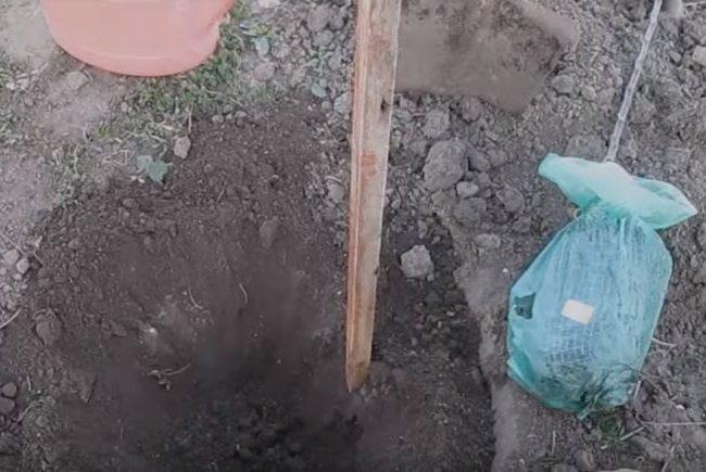 Установка опорного колышка в посадочную яму для яблони