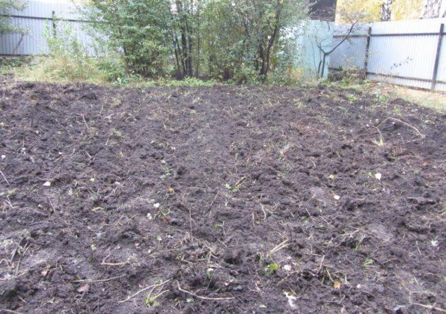 Забор из профилированного листа вокруг перекопанного огорода