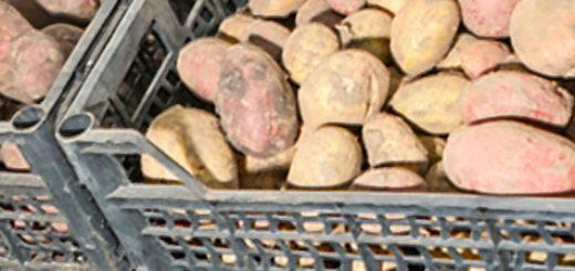 Хранение картошки в погребе подвала гаража