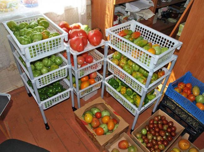 Дозревание неспелых помидоров на кухне частного дома