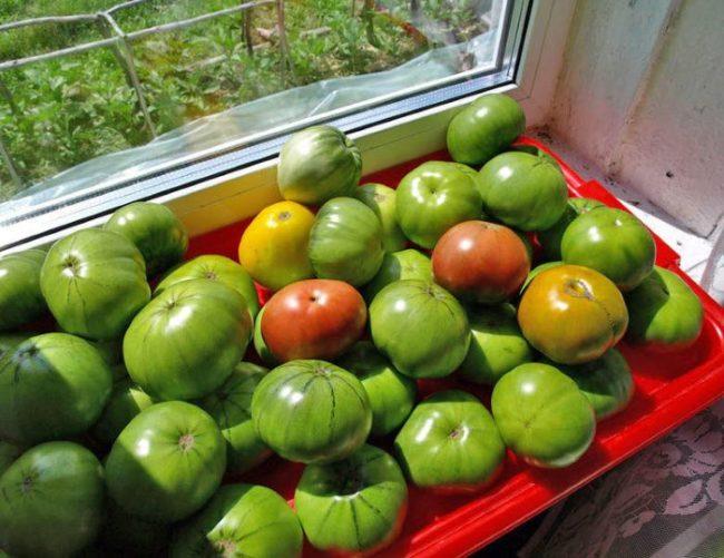 Поднос с дозревающими помидорами на подоконнике частного дома