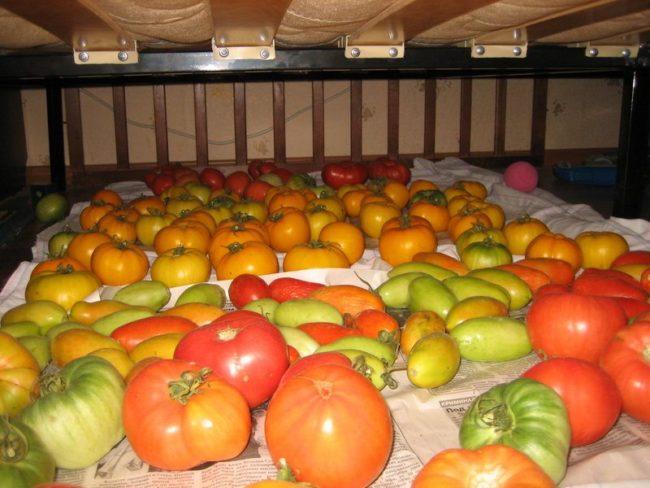 Хранение помидоров в квартире под кроватью на газетах