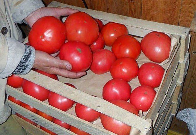 Укладка спелых помидоров в деревянные ящики для хранения