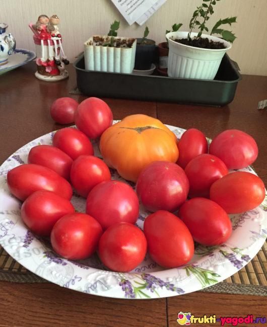 Спелые помидоры на тарелке на кухонном столе