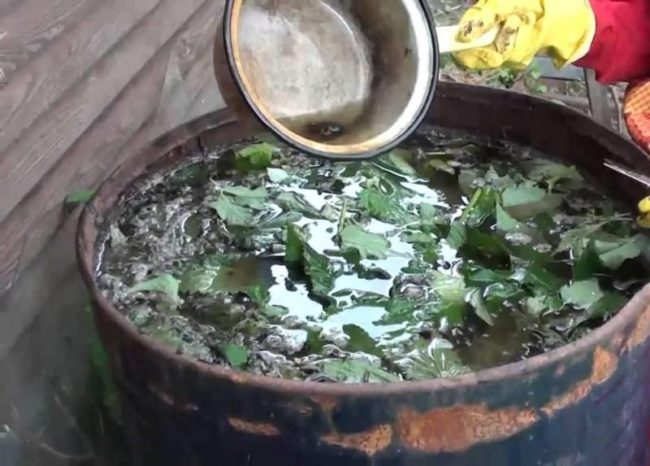 Металлическая бочка с травяным настоем для подкормки помидоры