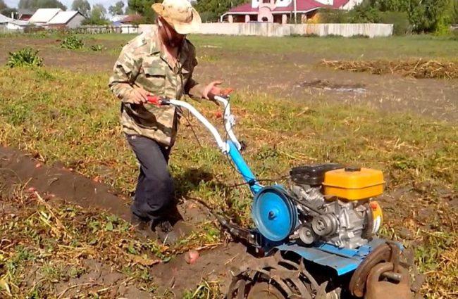 Выкапывание картошки мотоблоком на фермерском поле