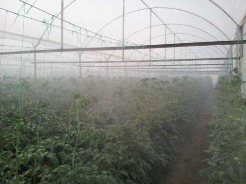 Работа системы туманнообразования в теплице из поликарбоната