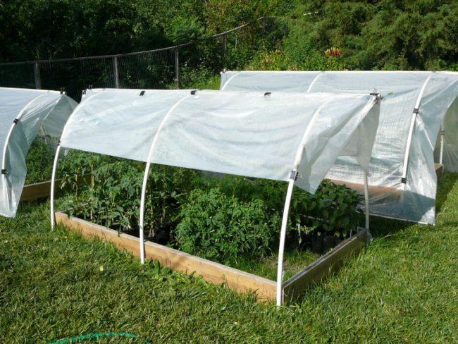 Мини парники над грядками с томатами для защиты от солнца и дождей