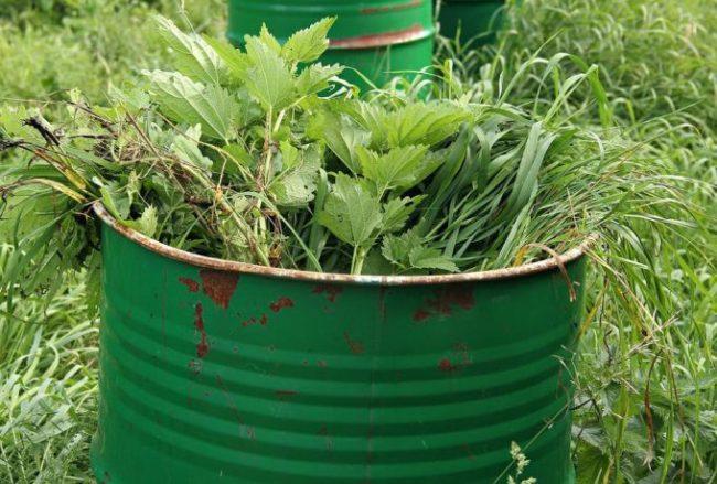 Металлическая бочка зеленого цвета с настоем крапивы и других трав для подкормки яблони