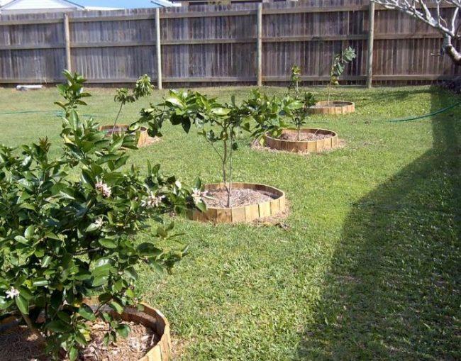 Клумбы из дощечек вокруг молодых деревьев заложенного плодового сада