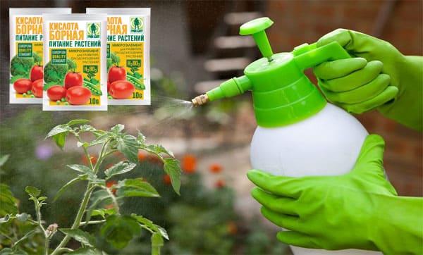 Обработка помидоров борной кислотой в открытом грунте