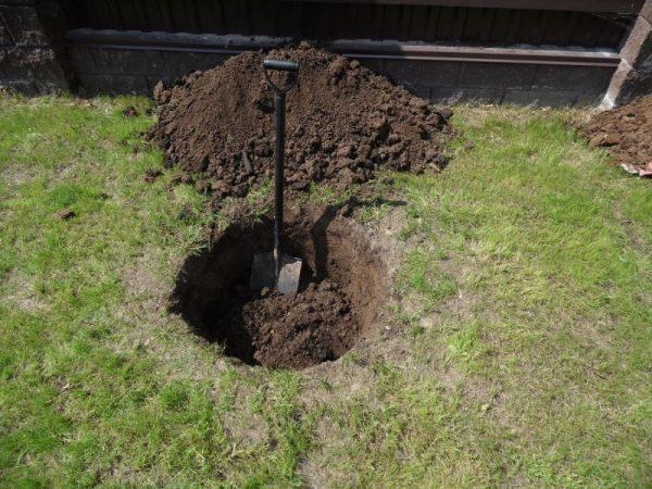 Копка посадочной ямы для саженца сортовой яблони лопатой с удобной рукояткой