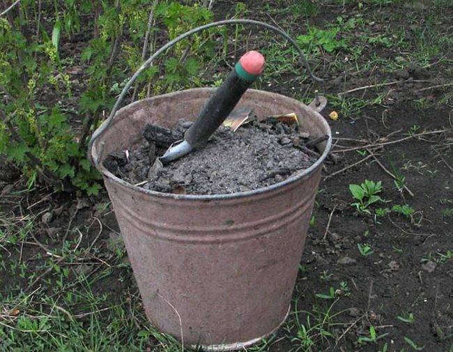 Садовый совок в ведре с древесной золой для подкормки помидоров