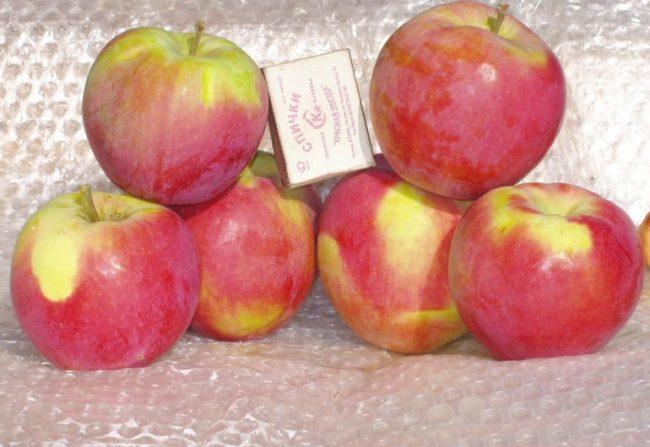 Внешний вид и размеры спелых яблок сорта Анис Свердловский
