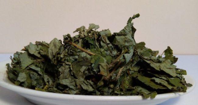 Сухие листья чистотела для приготовления настоя от вредителей яблони