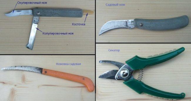 Ножи и другие инструменты для выполнения прививки яблони