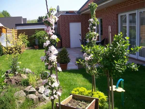 Цветение колоновидных яблонь в саду небольшого дачного владения