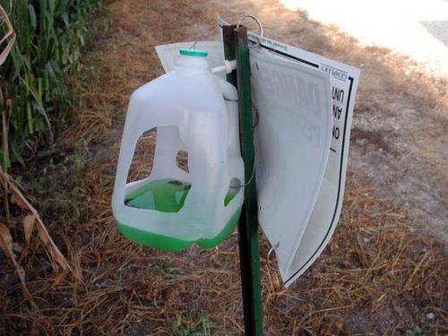 Ловушка для листовертки и других вредных бабочек из пластиковой канистры