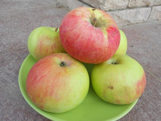 Зелено-красные плоды яблони сорта Марат Бусурин в зеленой тарелке