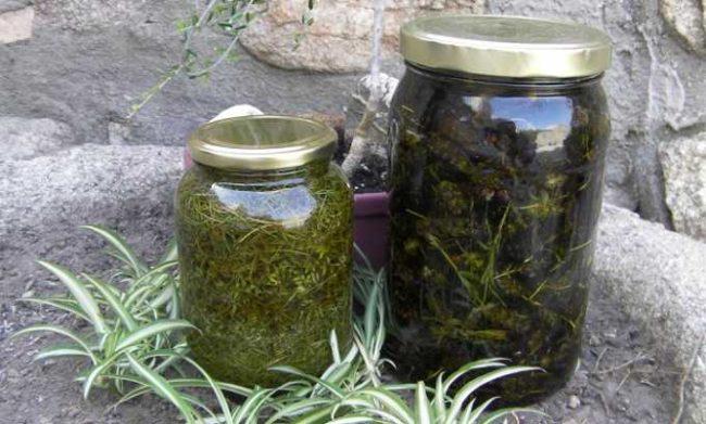 Две стеклянные банки с настоем травы тысячелистника для обработки листьев яблони от тли