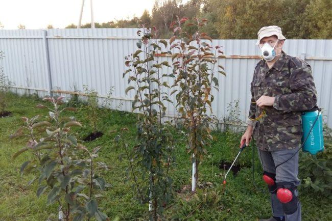 Осенняя обработка молодых яблонь раствором железного купороса