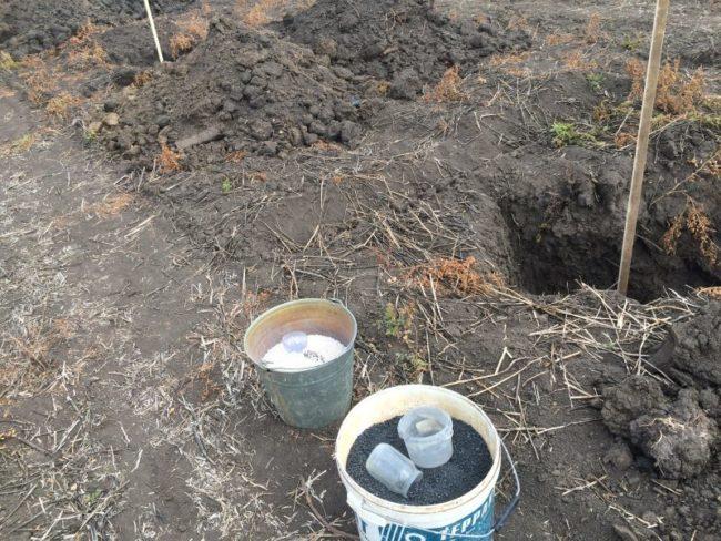 Подготовка лунок для высадки саженцев колоновидных яблонь