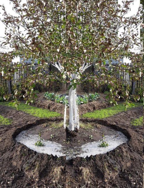 Ранневесенний полив молодого деревца яблони по бороздкам