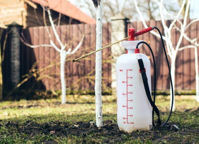 Ручной опрыскиватель с пластиковым баллоном для весенней обработки яблонь