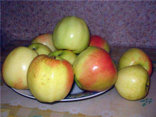 Красно-зеленые яблоки гибридного сорта Сергиана на фарфоровой чашке