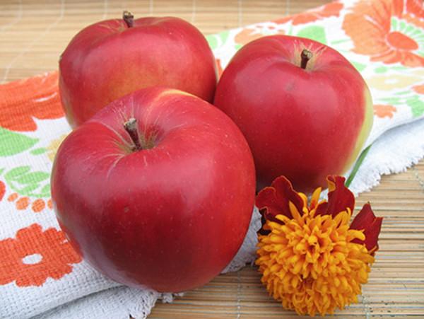 Три спелых яблока красного покровного окраса сорта Анис Свердловский