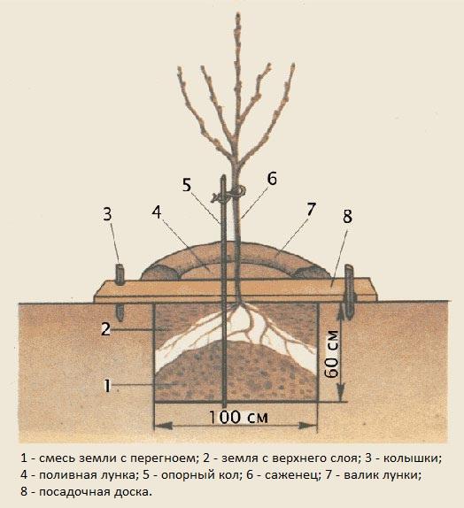Схема ямы для высадки яблоневого саженца на постоянное место