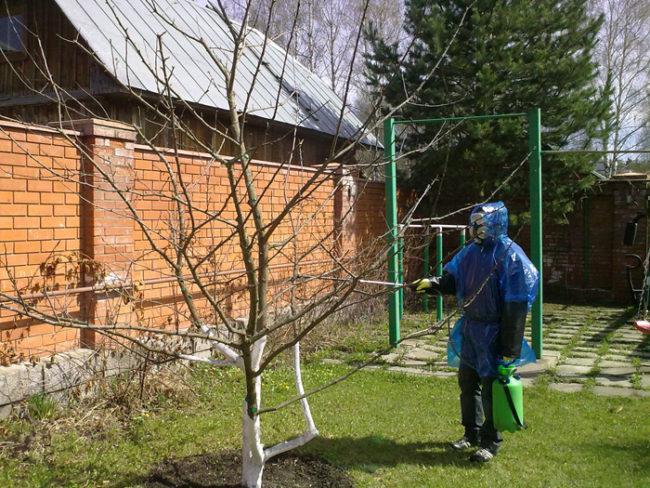 Обработка яблони раствором медного купороса ранней весной