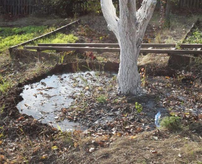 Влагозарядный полив дерева яблони поздней осенью на садовом участке