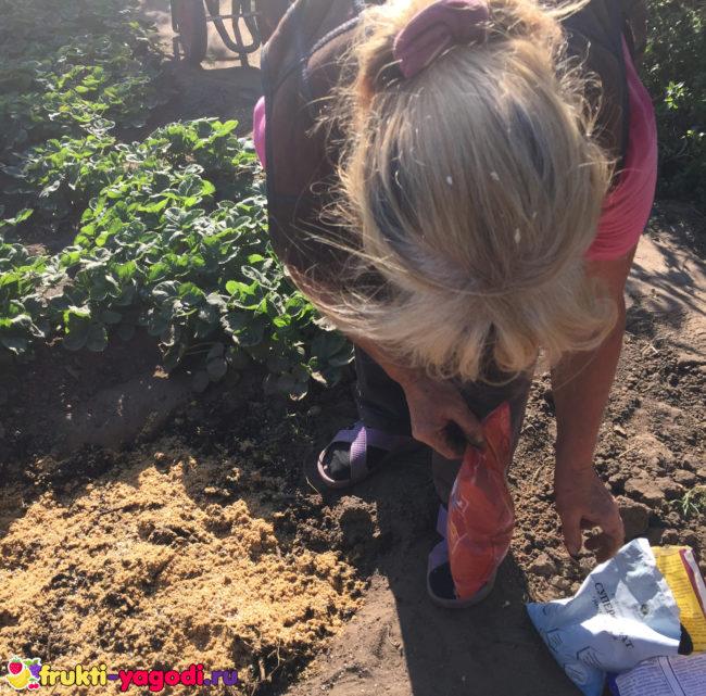 Внесение удобрений в посадочную лунку яблони