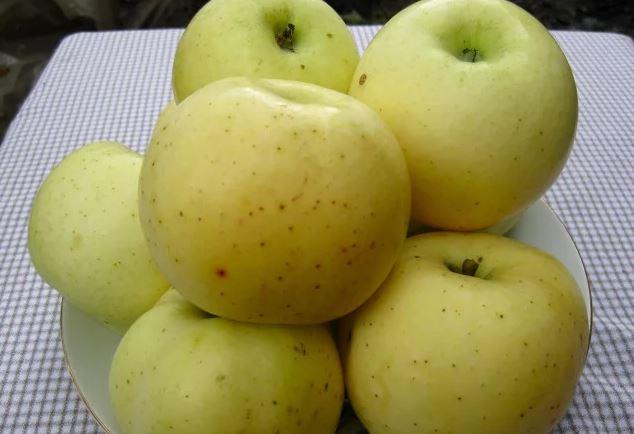 Горстка яблок гибридного сорта Чашниковское желто-зеленого окраса
