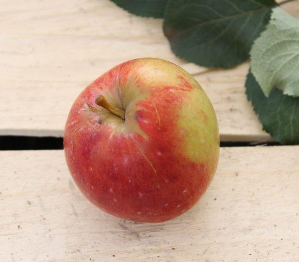 Спелое яблоко сорта Анис алое с размытым румянцем на кожице