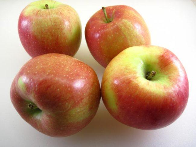 Четыре спелых яблока с размытым румянцем сорта Белорусское сладкое