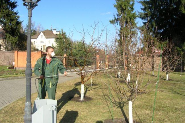 Опрыскивание плодовых деревьев ранней весной раствором медного купороса